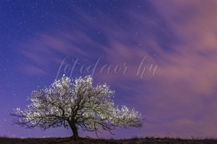 Daróczi Csaba - Éjszakai virágzás